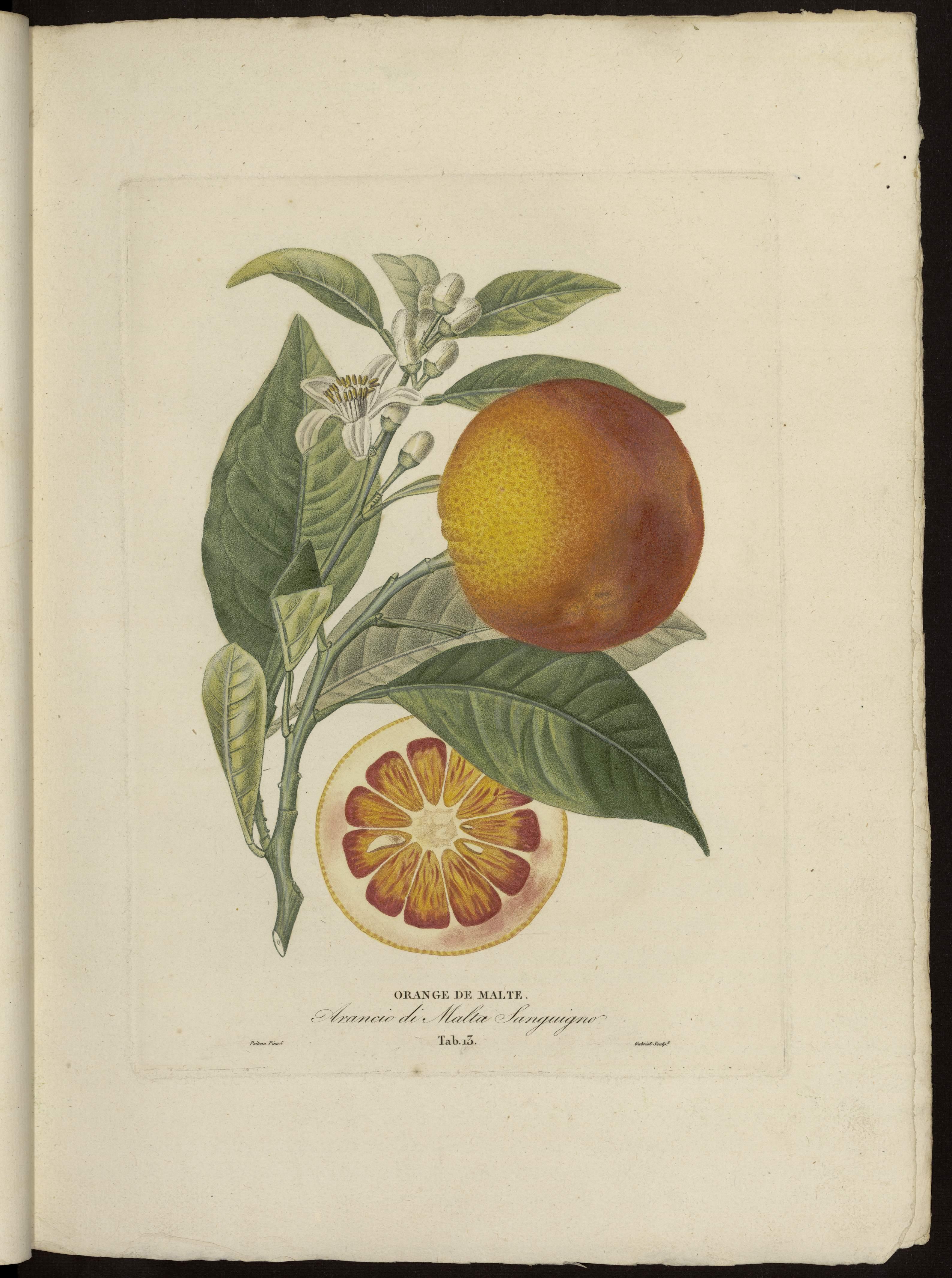 Orange de Malte